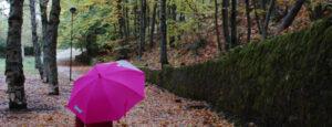 ¿De qué color ves el otoño?